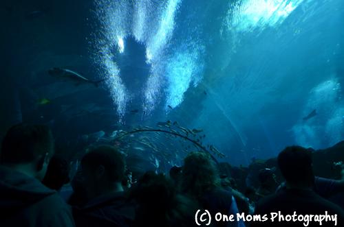 Georiga Aquarium