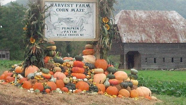 Harvest-Farm-Corn-Maze