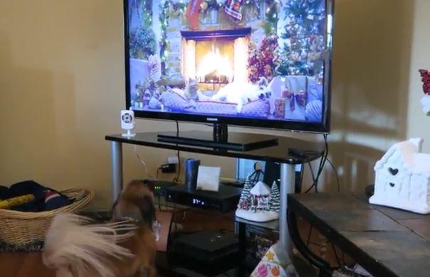 dog-barks-at-television
