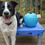 The Teal Pumpkin Is Our Favorite!